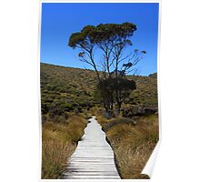 On the Track - Cradle Mountain National Park, Tasmania Poster