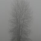 alone in the fog by memaggie