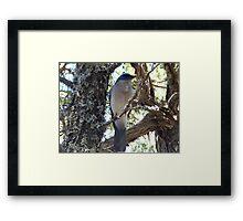 Big Bend Blue Bird Framed Print