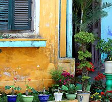 Potted Colour by Sarah Barker