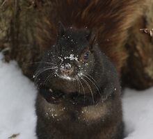 I'm sooo cold...!! by Alyce Taylor