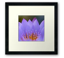 Water lily abstract, ii Framed Print