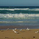 Seagulls by Alicia  Liliana