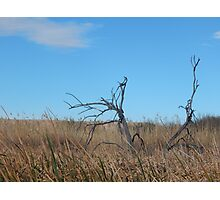 Dead Wood in the Weeds Photographic Print