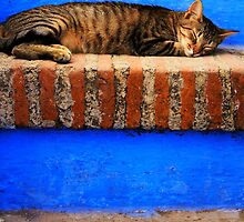Cat taking a nap by focusonphotos