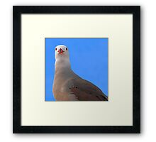 Guard bird..... Framed Print
