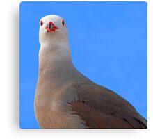 Guard bird..... Canvas Print