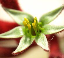 Flower by nikki newman