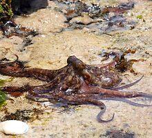 Octopus by Stuart Cooney