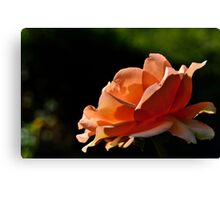 Rose and Sun Canvas Print