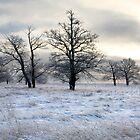winter landscape by vkph