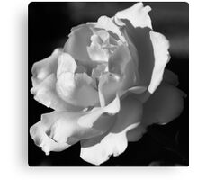 The Last Rose of Summer Canvas Print
