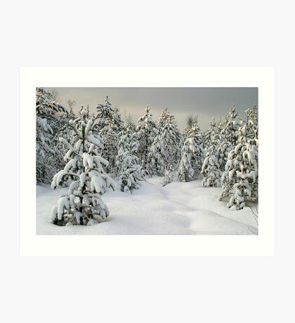 winter pine forest Art Print