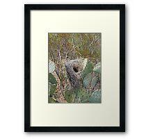 Bird Nest in Cacti Framed Print