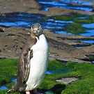 Yellow-eyed Penguin Portrait by Nickolay Stanev
