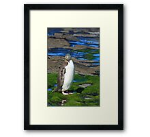 Yellow-eyed Penguin Portrait Framed Print