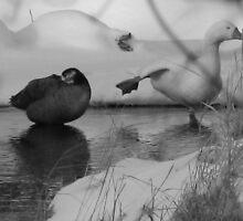 duck yoga by setatsgardner