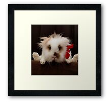 Lion head bunny flying behind a chair Framed Print