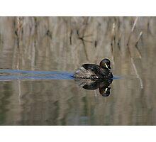 Little water bird Photographic Print