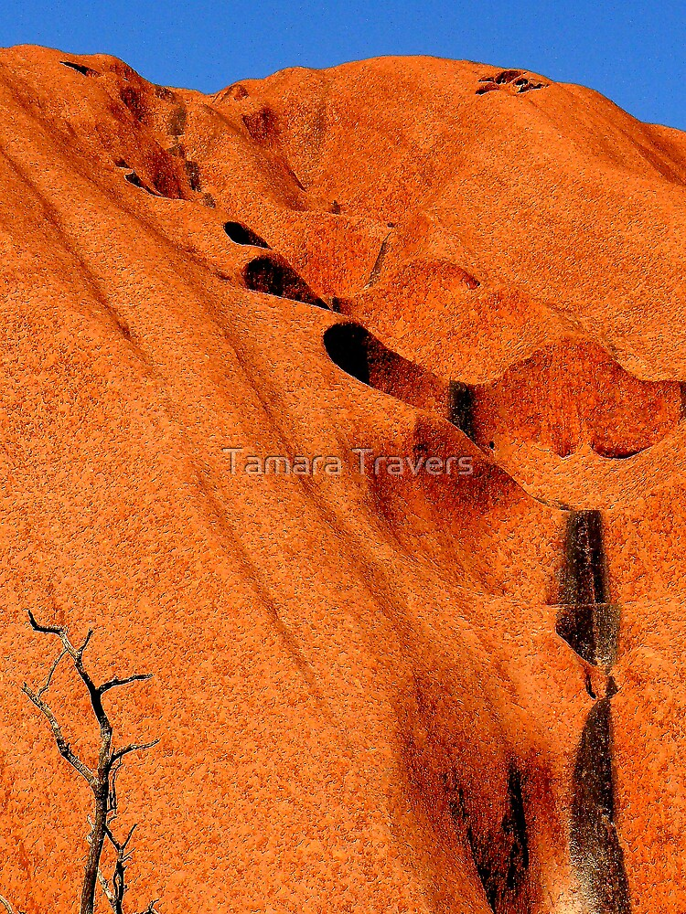 Dried out waterfall by Tamara Travers