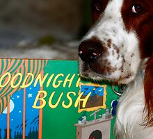 Goodnight Bush by Julie Marks