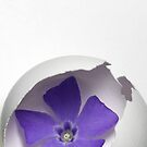 Half Egg And Flower by David Piszczek