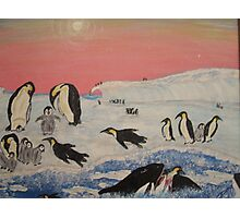 King Penguins in orca play Photographic Print