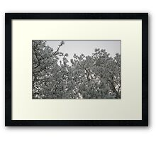 Frosty Pines Framed Print