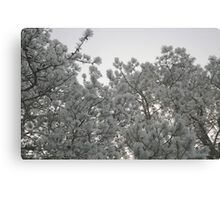 Frosty Pines Canvas Print