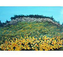 Broom Flowers, Capri Photographic Print