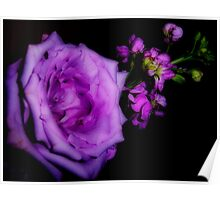 Softness in Purple Poster