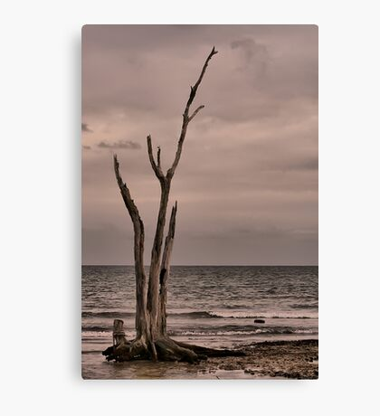 Standing Tall Canvas Print