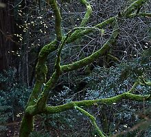 Rainy day in Muir Woods by Scott Englund