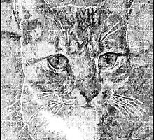 Doodled Cat by Lucy Hollis