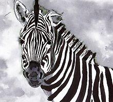 Zebra by artbasik