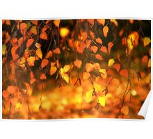 Backlit Leaves at Sunset Poster