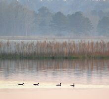 Ducks on a Pastel Morning by Charlie Sawyer