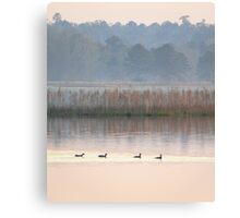 Ducks on a Pastel Morning Canvas Print