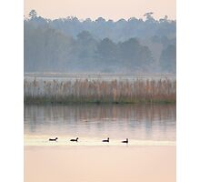 Ducks on a Pastel Morning Photographic Print