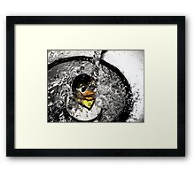 rubber 'Duck'  Framed Print