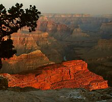 Early Morning, Grand Canyon by Stephen Vecchiotti
