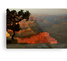Early Morning, Grand Canyon Metal Print