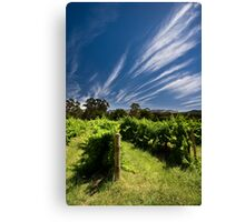 Feathertop Canvas Print