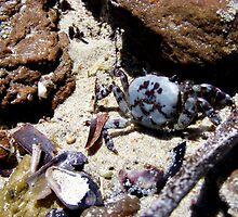 Crab by elizabethrose05