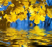 Color Autumn by christinaree