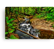 Young's Creek Canvas Print