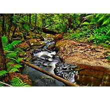 Young's Creek Photographic Print