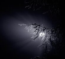 night fog by Bill vander Sluys