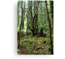 Creepy Crawley Forest - South West Tasmania Canvas Print