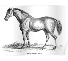 Horse, of course Poster